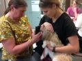 Reg'd Vet Tech - Jennifer & Kait, Veterinary Student