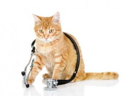 cat-at-vet-e1411565747172